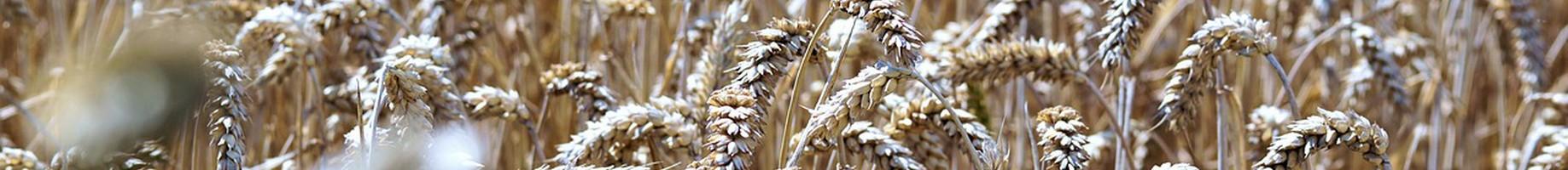 cereals-2595417_1280