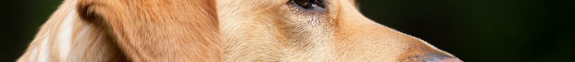 dog-1194083_1280