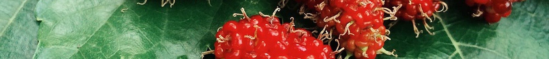 fruit-1835558_1280