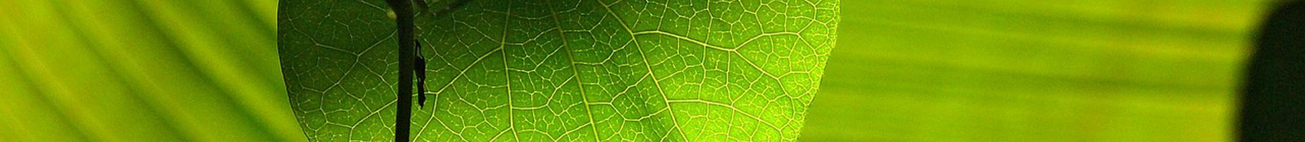 green-547400_1280