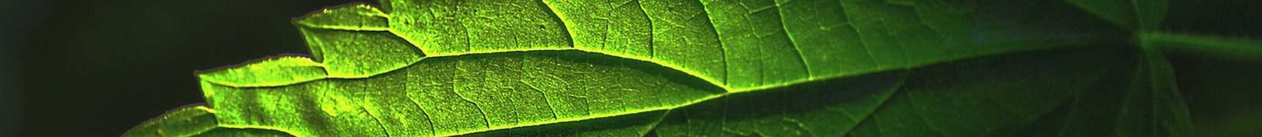 plant-2830739_1280