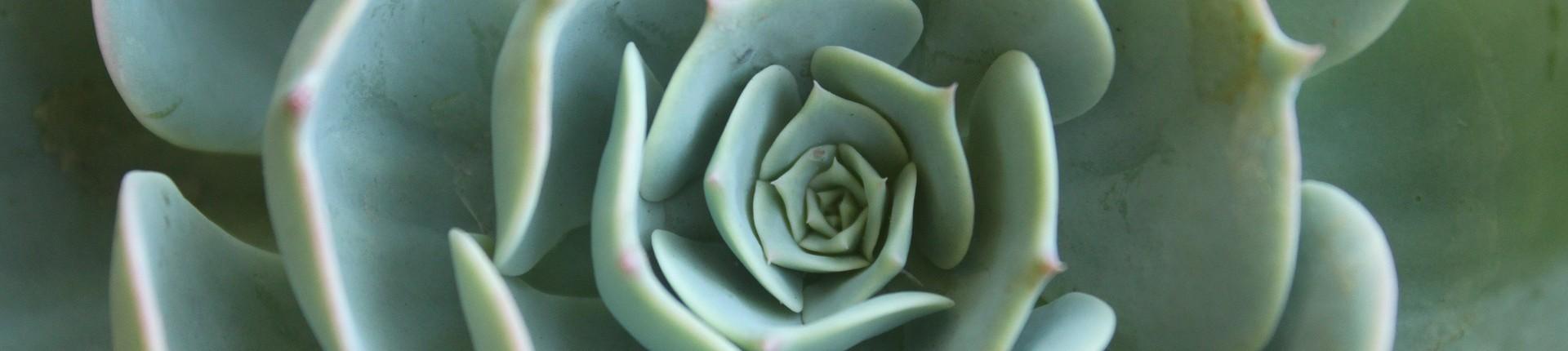 succulent-2763668_1920 (1)